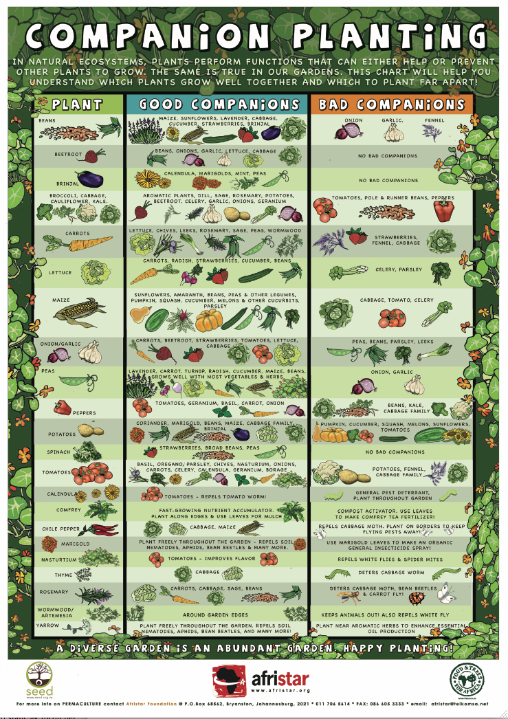 Organic Gardening 101 How to Start a Garden and Keep It Healthy – Sample Companion Planting Chart