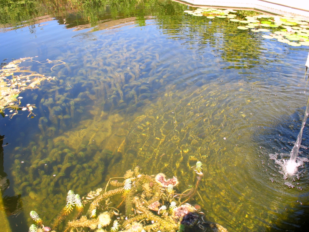 Eco infastructure after 9 20 2011 for Koi pond builders orlando fl