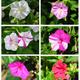Flower%20colors%20c