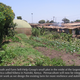 Kiberafarm