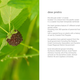 Heart plant tome september 2013 6web