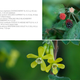 Heart plant tome september 2013 19web