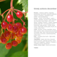 Heart plant tome september 2013 70web