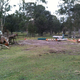 Front yard eucalypts