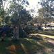 Side yard stumps 2