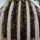 Bienen 600