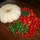 A days harvest