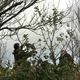 Caithriona___marty_pruning_along_old_rwl_walk_(4)