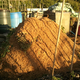 Compost_day1_20150623