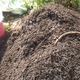 Compost_turn_20150718_close