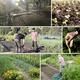 Spring soil health internship1