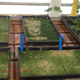 Seed starting in aquaponics 1