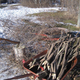 Tree stakes from pruning debris