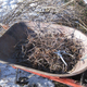 Mulch from pruning debris