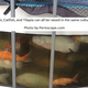 Aquaponics system fish 1