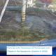 Tilapia in permscape aquaponics