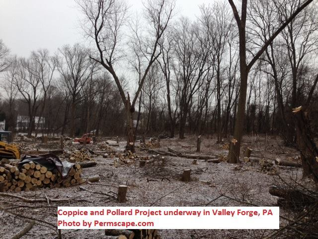 Permaculture food forest in Valley Forge, PA – USA ( Photo by: John Stevenson of Permscape Permaculture )