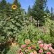 Fairie Garden in the Willowwacks