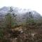 Reforest Alba