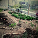Philly Food Forests