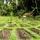 Jiwa Damai Permaculture Center Bali