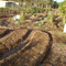 Little Forest Farm Permaculture