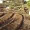 Little Forest Farm Permaculture