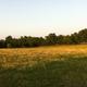 onesojourner's 3 acres