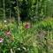 Nottinghill Edible Forest Garden