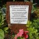 Permaculture Guerilla Garden