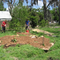 Porters Community Garden: Food Forest