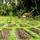 Jiwa Damai Permaculture Center Bali