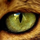 cat eyes (conojosdegata)