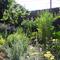 First Forest Garden Experiment2010