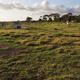 Mango Hill Community Farm