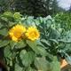 Church/Community/Food Bank Garden