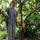 Bhumi Agroforestry