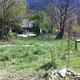wild retreat of turnip family