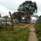 Transformation of quarter-acre block from depleted ornamental garden to abundant food forest in the semi-arid zone