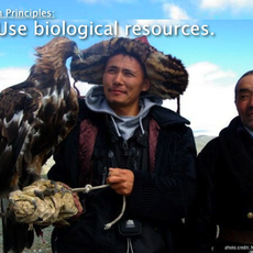 Bayan Ulgii Sustainable Agriculture and Economic Learning