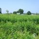 Panchavati Karumandurai Self Sustenance Farm