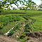 Chicagoland Permaculture at Townline Design