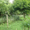 Sto. Domingo Food Forest