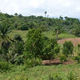 Ndanifor Permaculture Eco-Village
