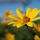 Washtenaw Permaculture