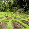 Jiwa Damai Agro-permaculture and Retreat Centre