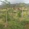 Kunia Loa Ridge Farmlands