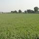 Adarsh Bio Organic CSA Farm
