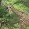Mokolodi Conservation Park Permaculture Education Garden
