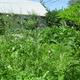 Rose Garden ReDo...Permie Style